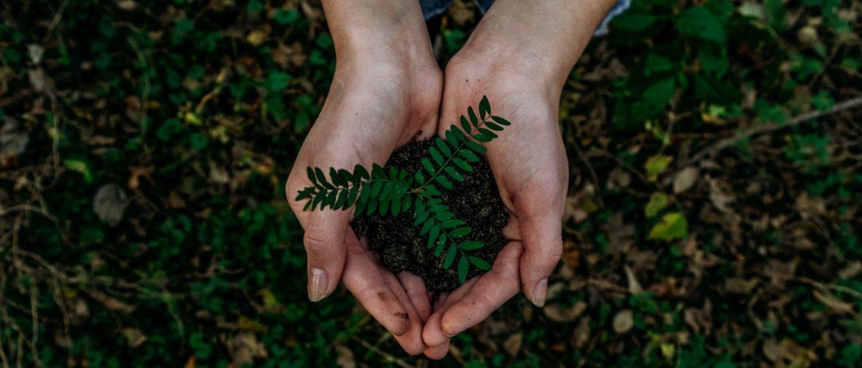 Eco friendly Smartphone Case